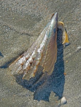 shells, beach